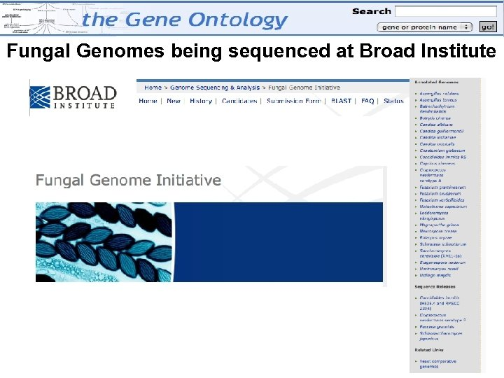 Fungal Genomes being sequenced at Broad Institute