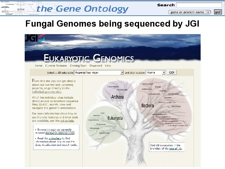 Fungal Genomes being sequenced by JGI
