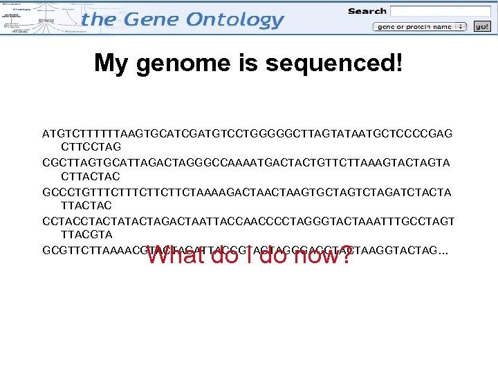 My genome is sequenced! ATGTCTTTTTTAAGTGCATCGATGTCCTGGGGGCTTAGTATAATGCTCCCCGAG CTTCCTAG CGCTTAGTGCATTAGACTAGGGCCAAAATGACTACTGTTCTTAAAGTACTAGTA CTTACTAC GCCCTGTTTCTTCTTCTAAAAGACTAAGTGCTAGTCTAGATCTACTA TTACTAC CCTACTATACTAGACTAATTACCAACCCCTAGGGTACTAAATTTGCCTAGT TTACGTA GCGTTCTTAAAACGTACTAGATTACCGTACTAGGGACGTACTAAGGTACTAG… What