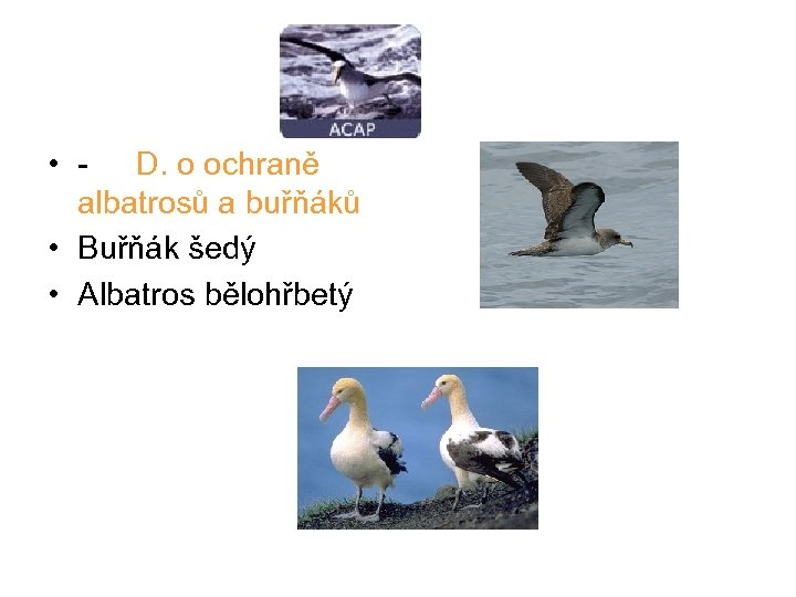 • - D. o ochraně albatrosů a buřňáků • Buřňák šedý • Albatros