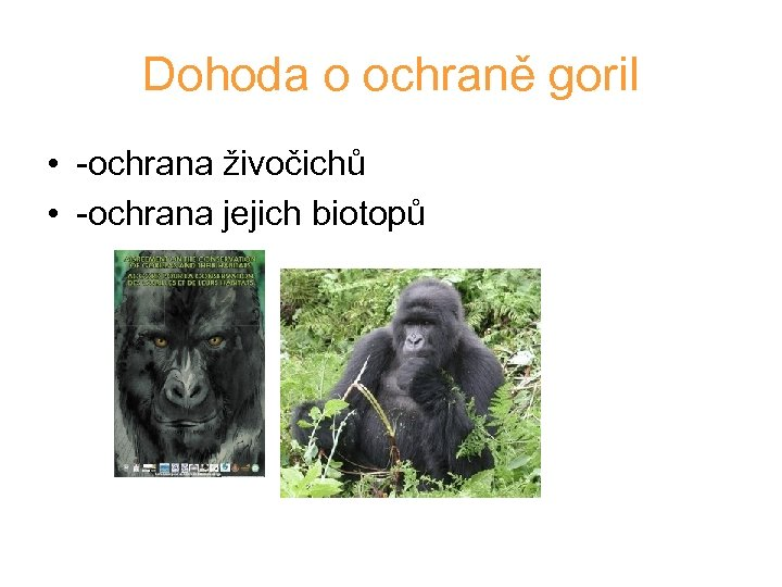 Dohoda o ochraně goril • -ochrana živočichů • -ochrana jejich biotopů