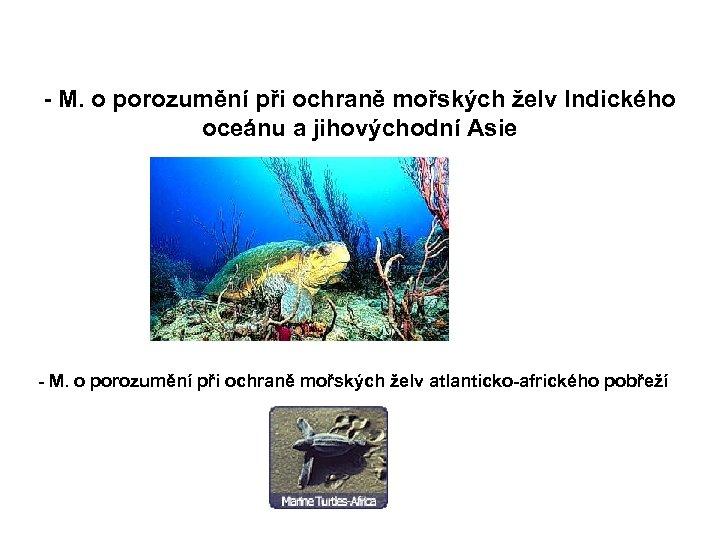 - M. o porozumění při ochraně mořských želv Indického oceánu a jihovýchodní Asie -