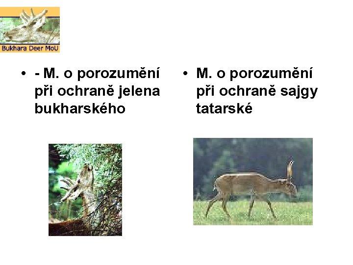 • - M. o porozumění při ochraně jelena bukharského • M. o porozumění