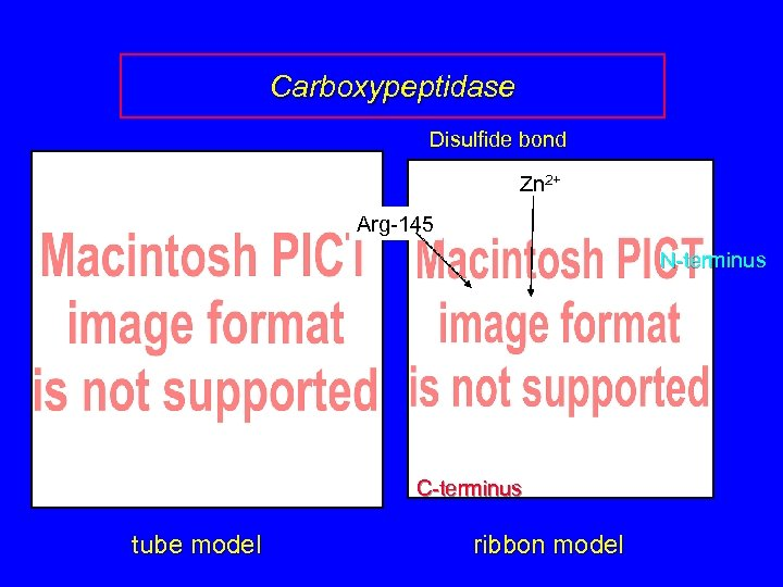 Carboxypeptidase Disulfide bond Zn 2+ Arg-145 N-terminus C-terminus tube model ribbon model