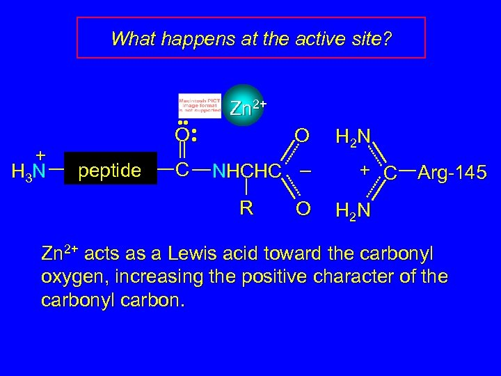 What happens at the active site? + H 3 N • • • O