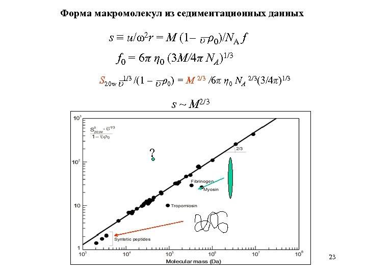 Форма макромолекул из седиментационных данных s ≡ u/ω2 r = M (1– ρ0)/NA f