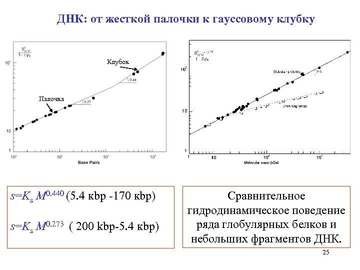 ДНК: от жесткой палочки к гауссовому клубку Клубок Палочка s=Ks M 0. 440