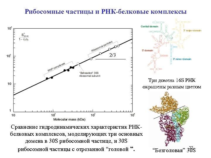Рибосомные частицы и РНК-белковые комплексы 2/3 Три домена 16 S РНК окрашены разным цветом