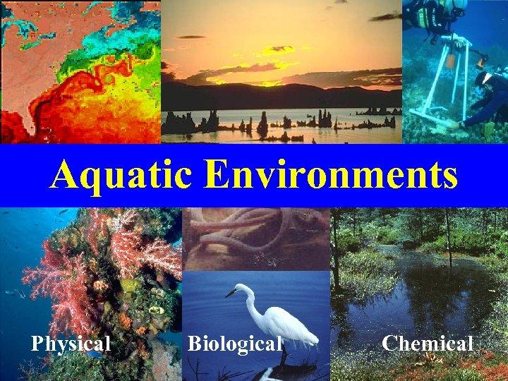 Aquatic Environments Physical Biological Chemical
