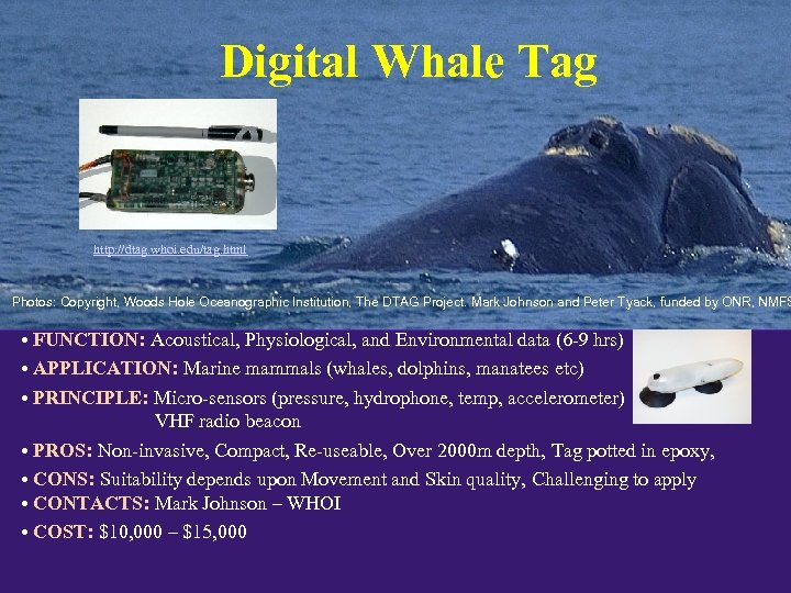 Digital Whale Tag http: //dtag. whoi. edu/tag. html Photos: Copyright, Woods Hole Oceanographic Institution,