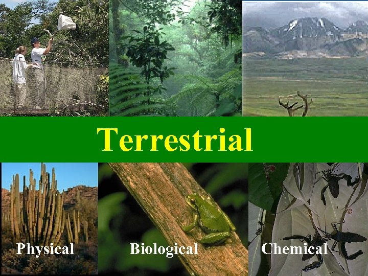 Terrestrial Physical Biological Chemical
