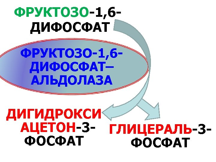 ФРУКТОЗО-1, 6 ДИФОСФАТ– АЛЬДОЛАЗА ДИГИДРОКСИ АЦЕТОН-3 - ГЛИЦЕРАЛЬ-3 ФОСФАТ