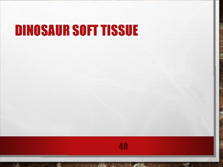 DINOSAUR SOFT TISSUE 40