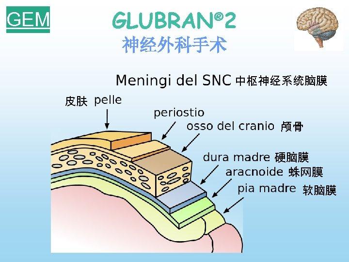 GLUBRAN® 2 GEM 神经外科手术 中枢神经系统脑膜 皮肤 颅骨 硬脑膜 蛛网膜 软脑膜