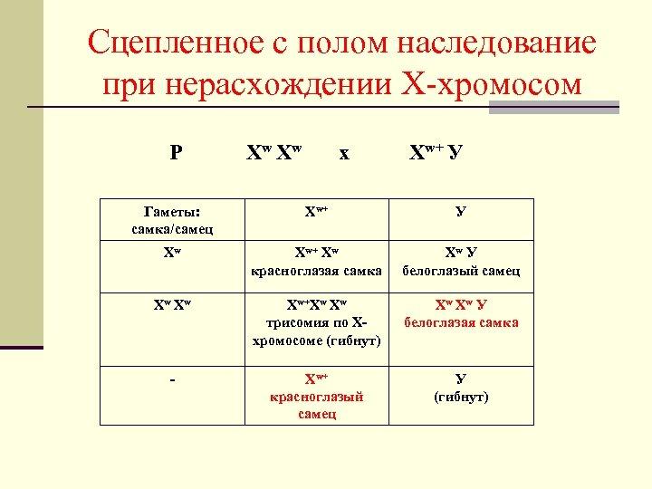 Сцепленное с полом наследование при нерасхождении Х-хромосом Р Хw Хw x Хw+ У Гаметы: