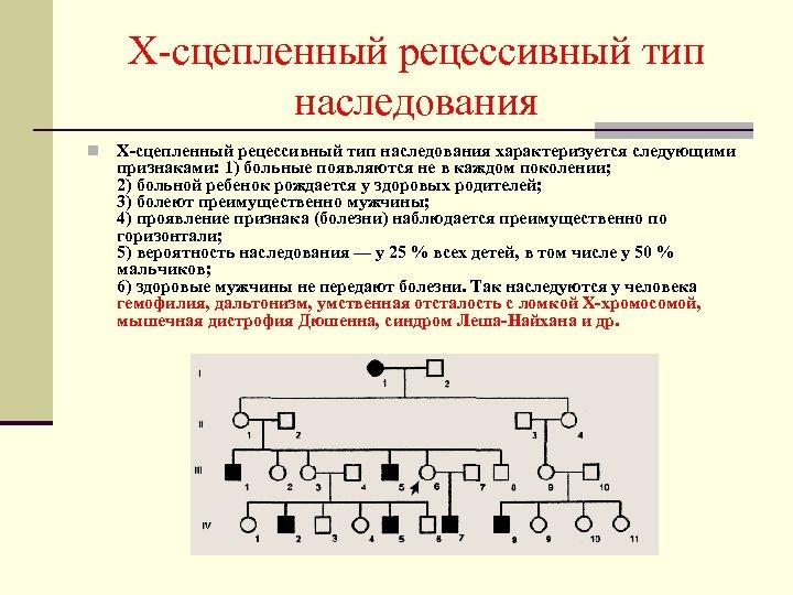 Х-сцепленный рецессивный тип наследования n Х-сцепленный рецессивный тип наследования характеризуется следующими признаками: 1) больные