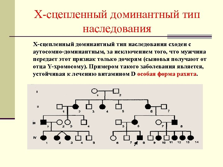 Х-сцепленный доминантный тип наследования сходен с аутосомно-доминантным, за исключением того, что мужчина передает этот