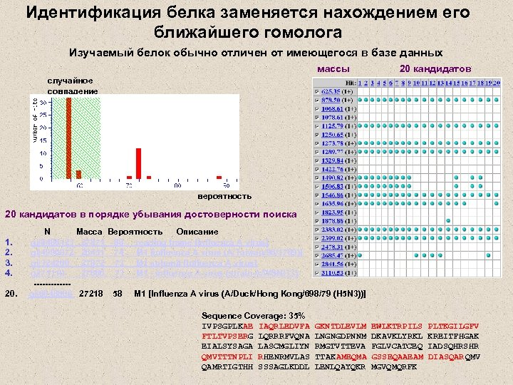 Идентификация белка заменяется нахождением его ближайшего гомолога Изучаемый белок обычно отличен от имеющегося в