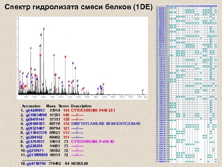 Cпектр гидролизата смеси белков (1 DE) Accession Mass Score 1. gi|4249653 53914 154 2.