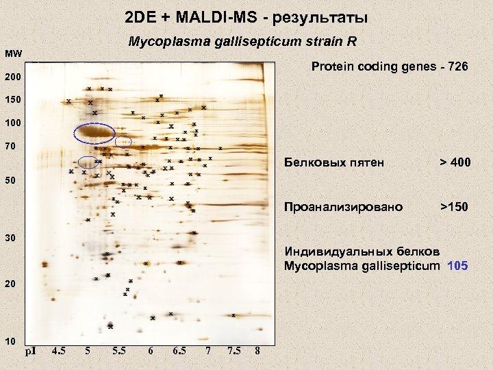 2 DE + MALDI-MS - результаты Mycoplasma gallisepticum strain R MW Protein coding genes