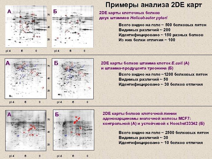 А 70 Примеры анализа 2 DE карт Б 2 DE карты клеточных белков двух