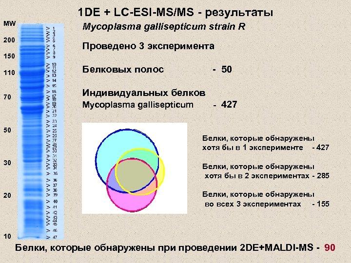 1 DE + LC-ESI-MS/MS - результаты MW 200 Mycoplasma gallisepticum strain R Проведено 3