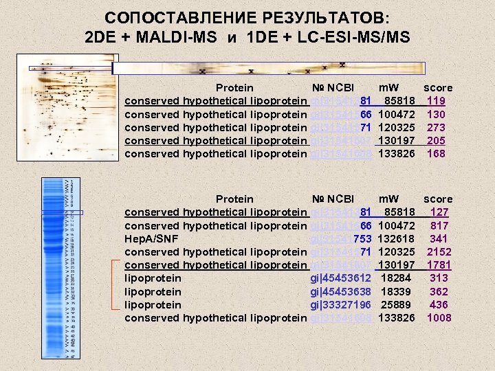 СОПОСТАВЛЕНИЕ РЕЗУЛЬТАТОВ: 2 DE + MALDI-MS и 1 DE + LC-ESI-MS/MS Protein № NCBI