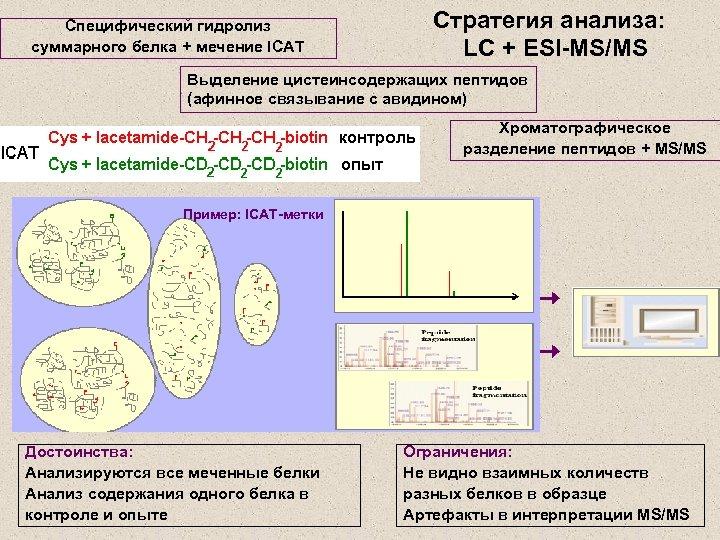 Специфический гидролиз суммарного белка + мечение ICAT Стратегия анализа: LC + ESI-MS/MS Выделение цистеинсодержащих