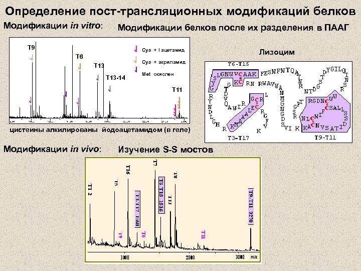 Определение пост-трансляционных модификаций белков Модификации in vitro: Модификации белков после их разделения в ПААГ