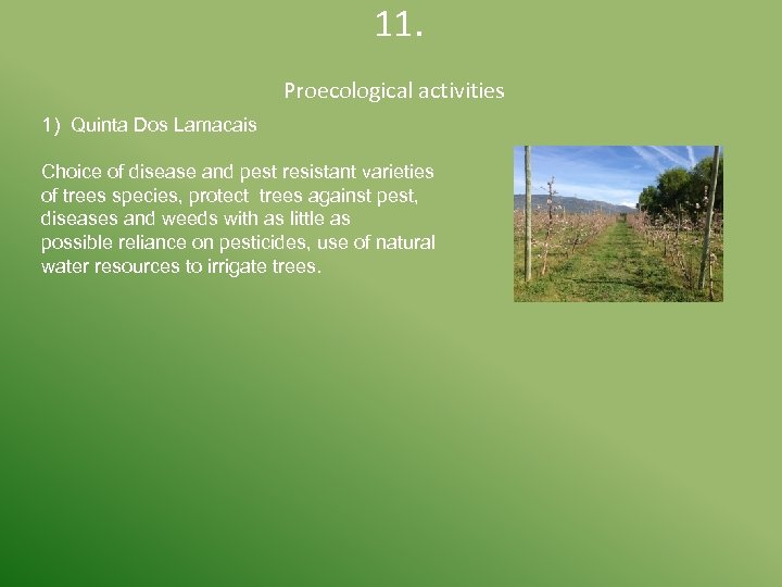 11. 1) Quinta Dos Lamacais Proecological activities Choice of disease and pest resistant
