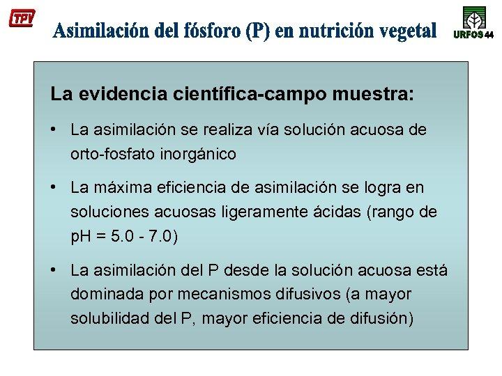 La evidencia científica-campo muestra: • La asimilación se realiza vía solución acuosa de orto-fosfato