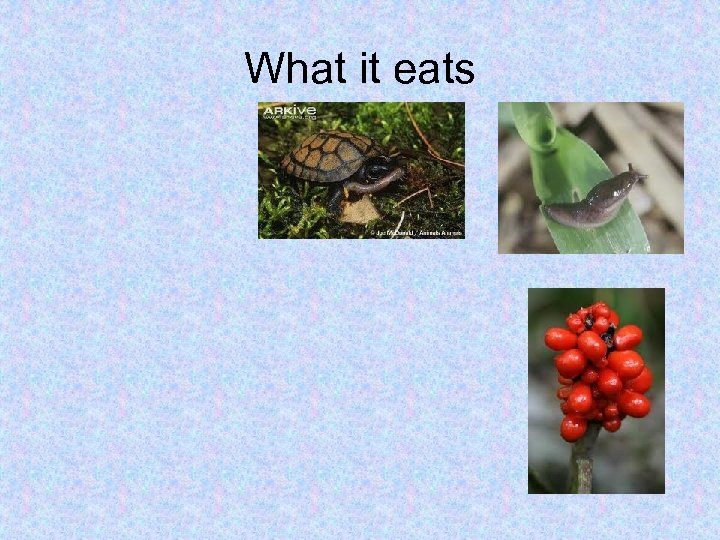 What it eats