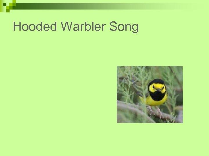 Hooded Warbler Song