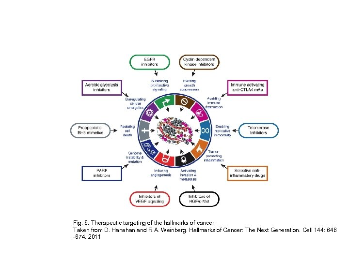 Fig. 6. Therapeutic targeting of the hallmarks of cancer. Taken from D. Hanahan and