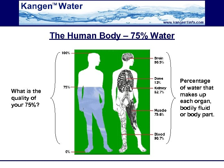 The Human Body – 75% Water What is the quality of your 75%? Percentage