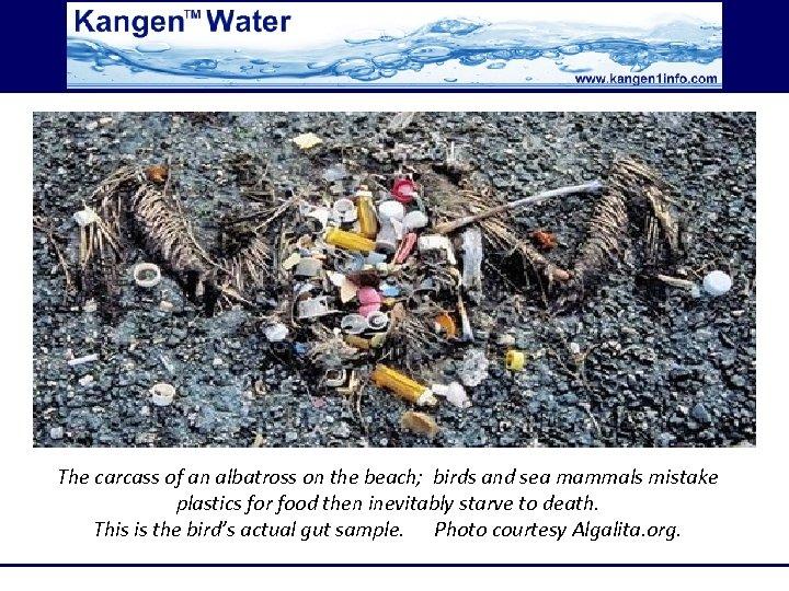 The carcass of an albatross on the beach; birds and sea mammals mistake plastics