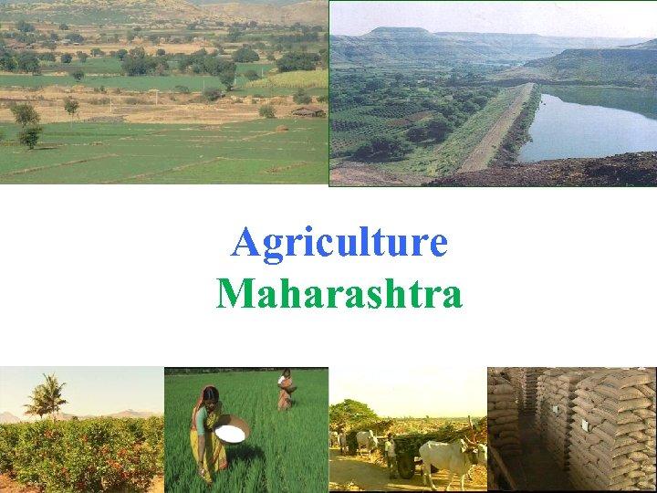 Agriculture Maharashtra