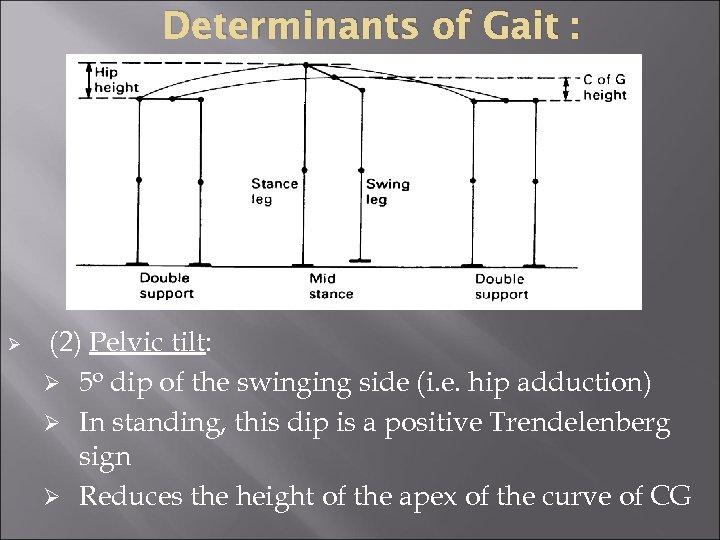Determinants of Gait : Ø (2) Pelvic tilt: Ø 5 o dip of the