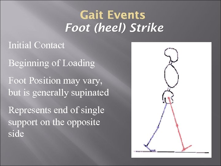 Gait Events Foot (heel) Strike Initial Contact Beginning of Loading Foot Position may vary,