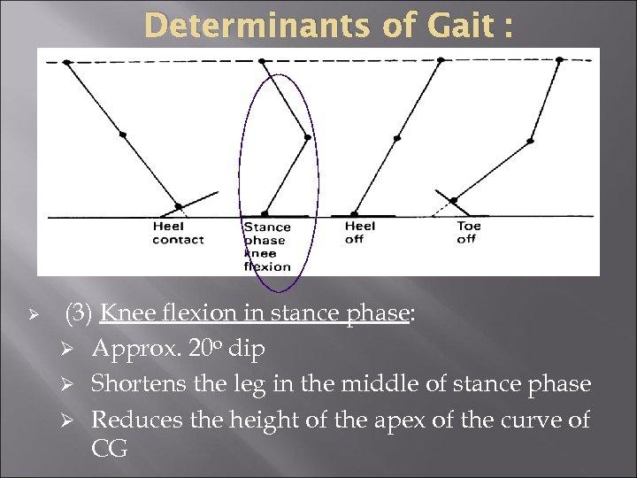 Determinants of Gait : Ø (3) Knee flexion in stance phase: Ø Approx. 20