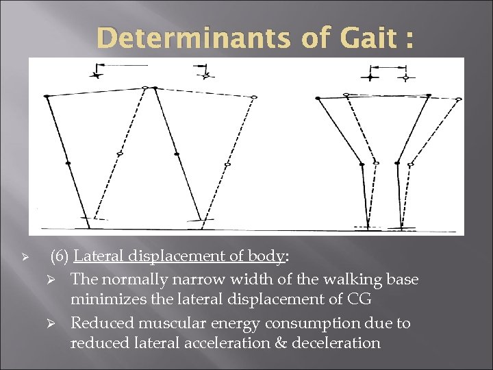 Determinants of Gait : Ø (6) Lateral displacement of body: Ø The normally narrow