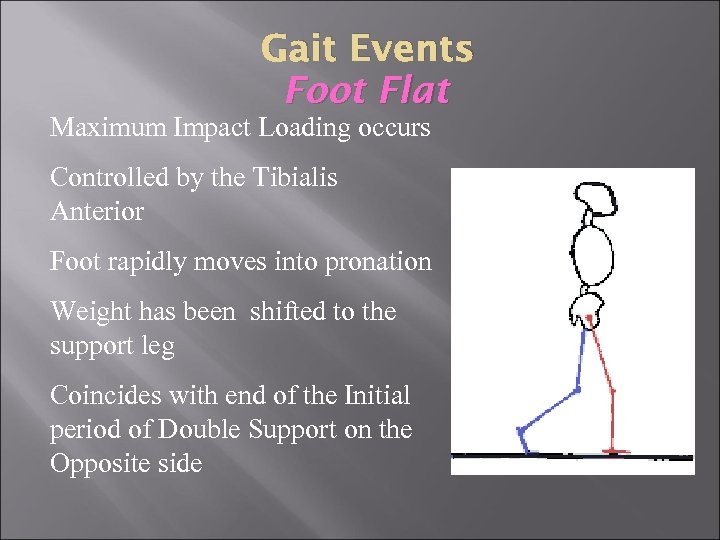 Gait Events Foot Flat Maximum Impact Loading occurs Controlled by the Tibialis Anterior Foot