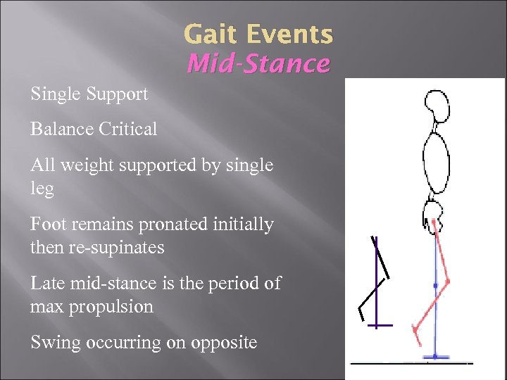 Gait Events Mid-Stance Single Support Balance Critical All weight supported by single leg Foot