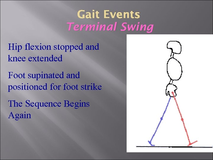 Gait Events Terminal Swing Hip flexion stopped and knee extended Foot supinated and positioned