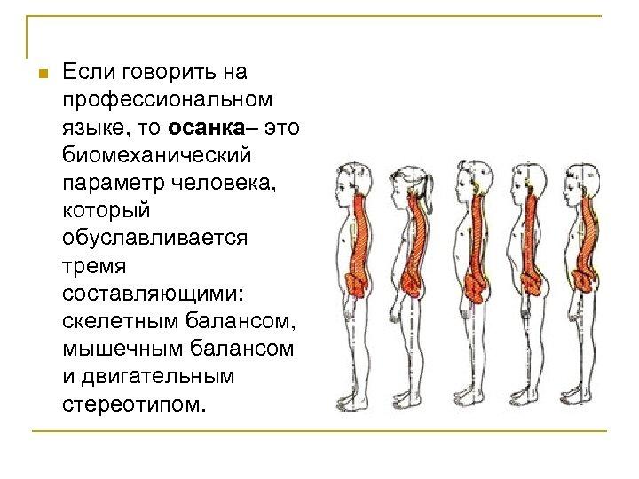 n Если говорить на профессиональном языке, то осанка– это биомеханический параметр человека, который обуславливается
