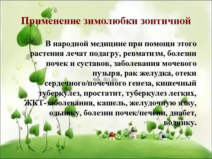 Применение зимолюбки зонтичной В народной медицине при помощи этого растения лечат подагру, ревматизм, болезни