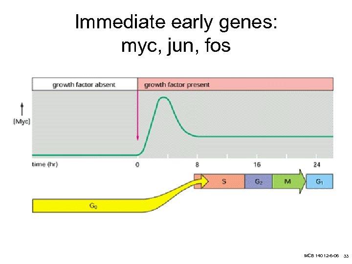 Immediate early genes: myc, jun, fos MCB 140 12 -6 -06 33