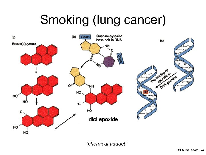 """Smoking (lung cancer) """"chemical adduct"""" MCB 140 12 -6 -06 44"""