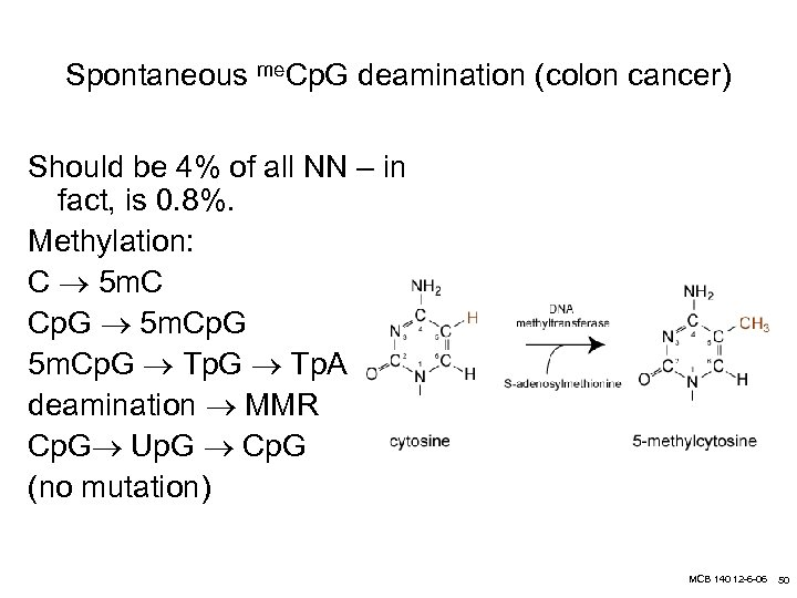 Spontaneous me. Cp. G deamination (colon cancer) Should be 4% of all NN –