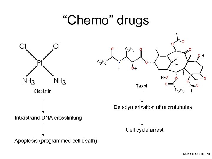 """""""Chemo"""" drugs Depolymerization of microtubules Intrastrand DNA crosslinking Cell cycle arrest Apoptosis (programmed cell"""
